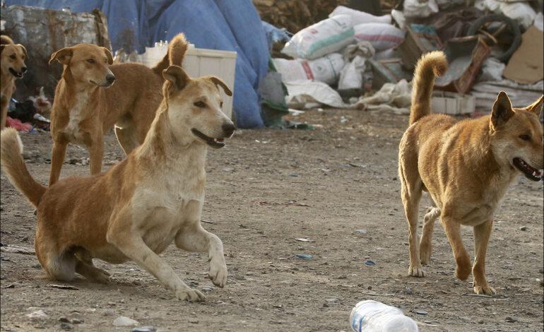 """صورة سيدة تتعرض لهجوم كلاب ضالة حتى الموت""""تفاصيل"""""""